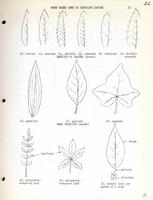 [Page of] [Leaflet No. 01] A Spring Flora of the Laramie Area
