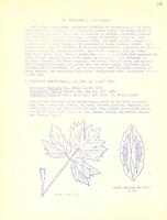 [Leaflet No. 16] The Apiaceae of Wyoming