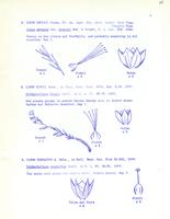 [Leaflet No. 10] The Linaceae of Wyoming