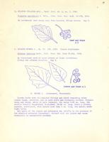 [Leaflet No. 06] The Solanaceae of Wyoming