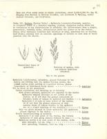 [Leaflet No. 20] The Poaceae of Wyoming