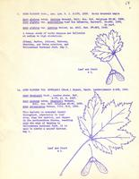 [Leaflet No. 04] The Aceraceae of Wyoming