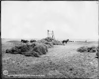 Stacking Alfalfa on Wheatland Flats, Wyoming