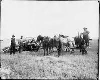 Farming Scene in Wheatland, Wyoming