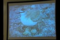 Video still showing desert bird